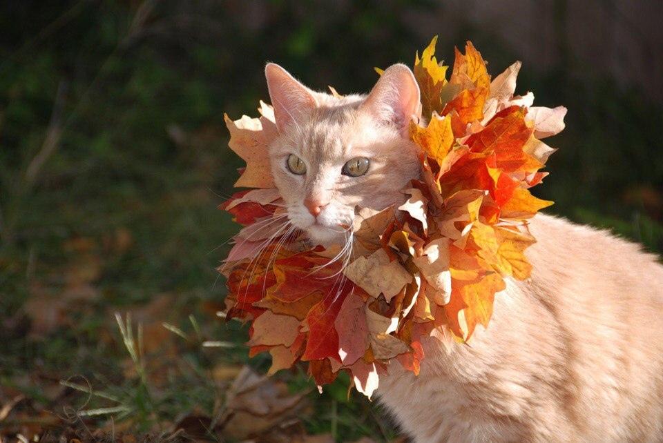 Красивые и удивительная осень. Подборка картинок 20 штук 15