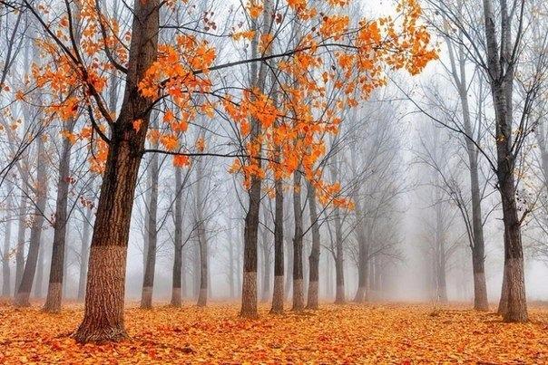 Красивые и удивительная осень. Подборка картинок 20 штук 17