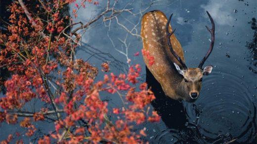 Красивые и удивительная осень. Подборка картинок 20 штук 8