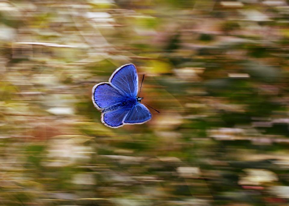 Красивые и удивительные картинки бабочек - подборка 20 фото 1
