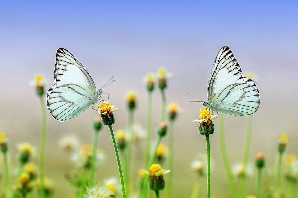 Красивые и удивительные картинки бабочек - подборка 20 фото 10