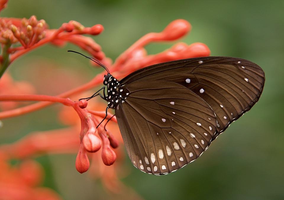 Красивые и удивительные картинки бабочек - подборка 20 фото 11