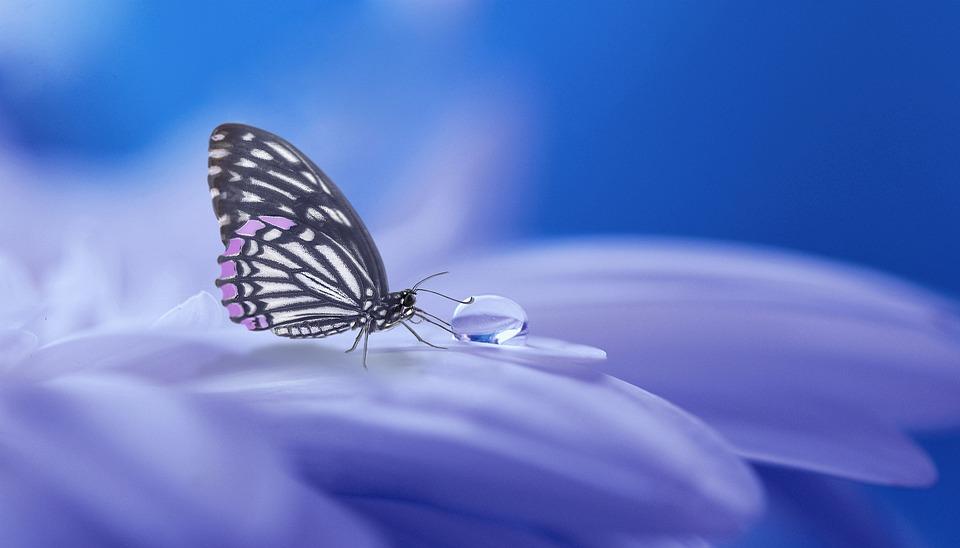 Красивые и удивительные картинки бабочек - подборка 20 фото 12