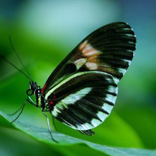Красивые и удивительные картинки бабочек - подборка 20 фото 16