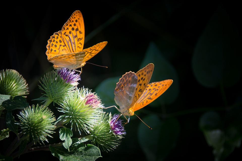 Красивые и удивительные картинки бабочек - подборка 20 фото 17