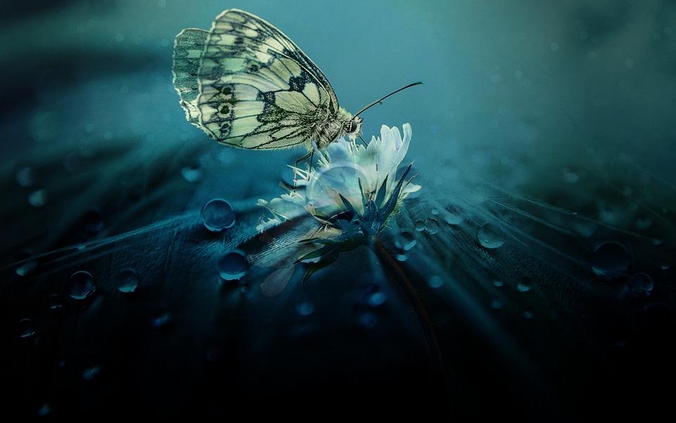 Красивые и удивительные картинки бабочек - подборка 20 фото 19