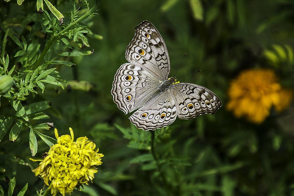 Красивые и удивительные картинки бабочек - подборка 20 фото 2