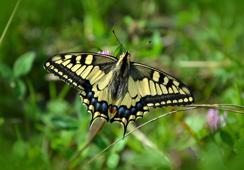 Красивые и удивительные картинки бабочек - подборка 20 фото 20