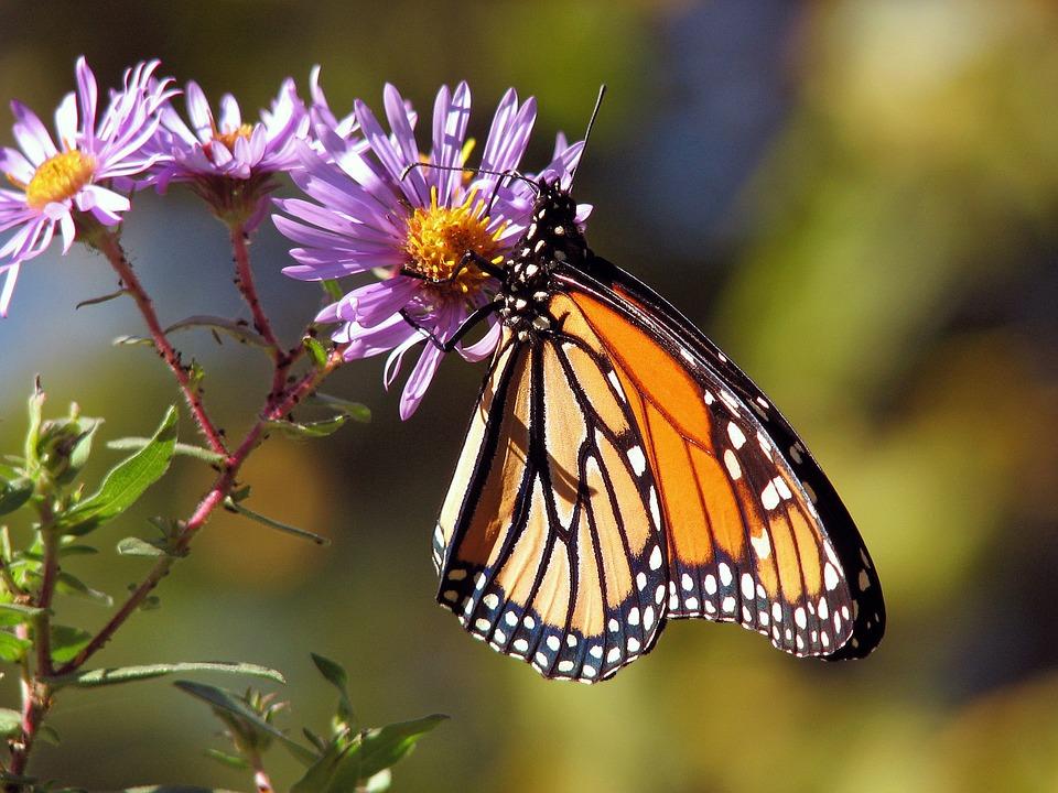 Красивые и удивительные картинки бабочек - подборка 20 фото 5