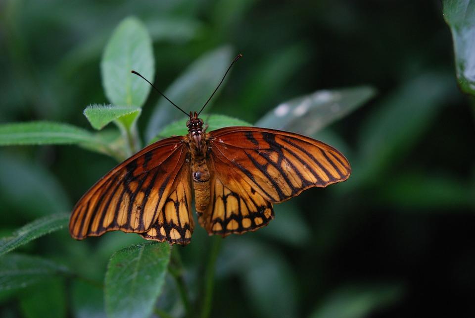 Красивые и удивительные картинки бабочек - подборка 20 фото 6