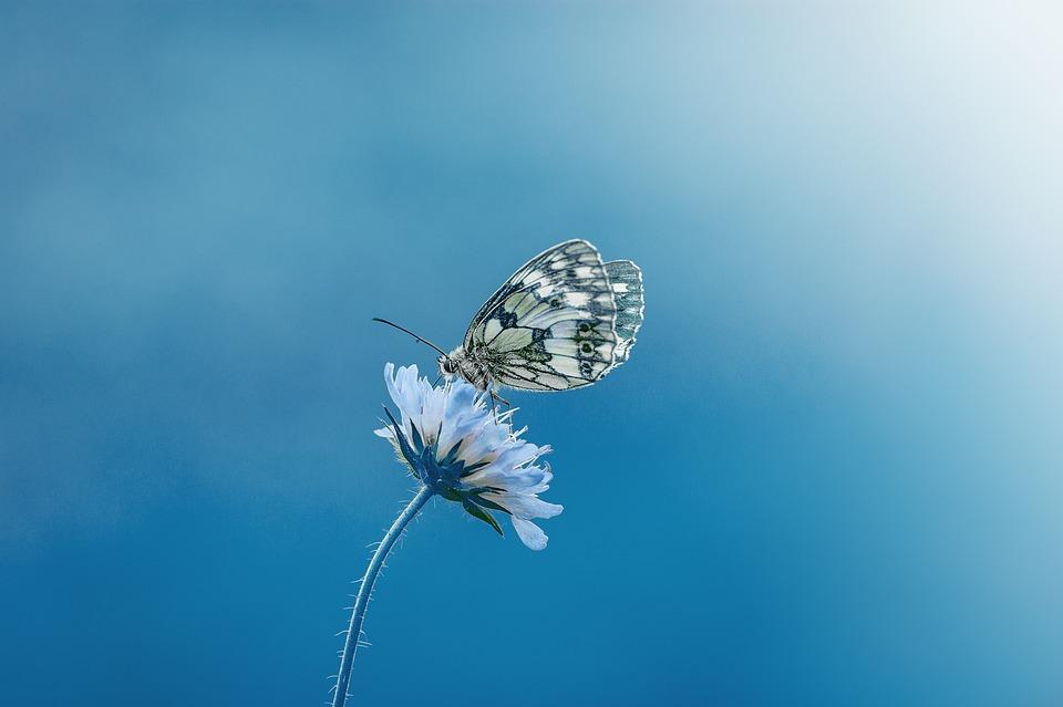 Красивые и удивительные картинки бабочек - подборка 20 фото 9