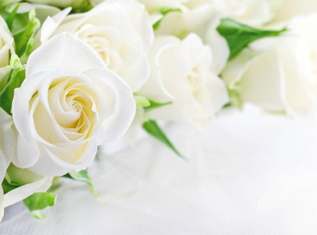 Красивые картинки цветов белые розы, удивительные букеты 1