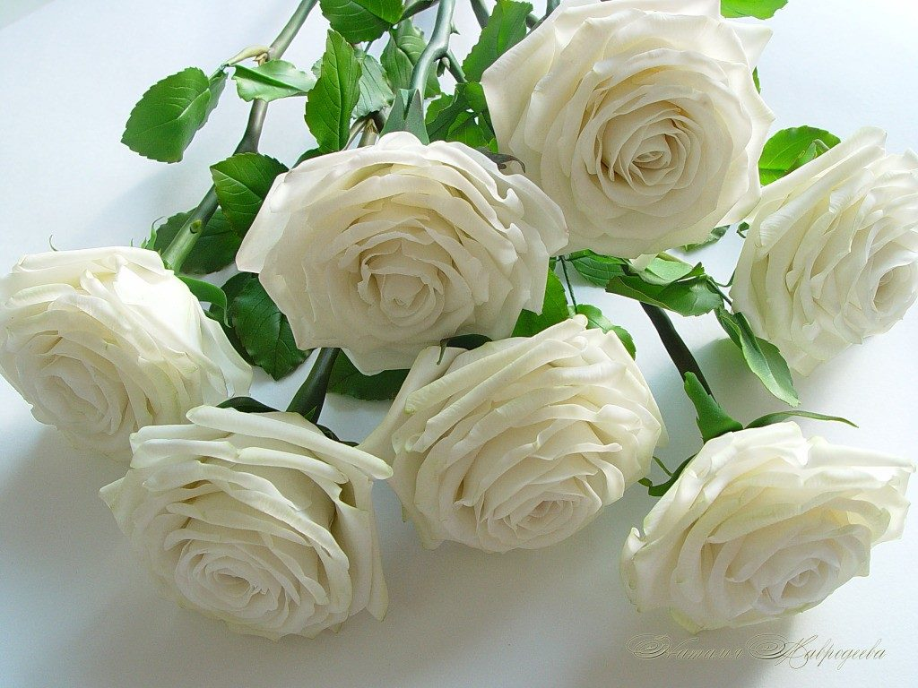 Дтп, открытка доброе утро белые розы