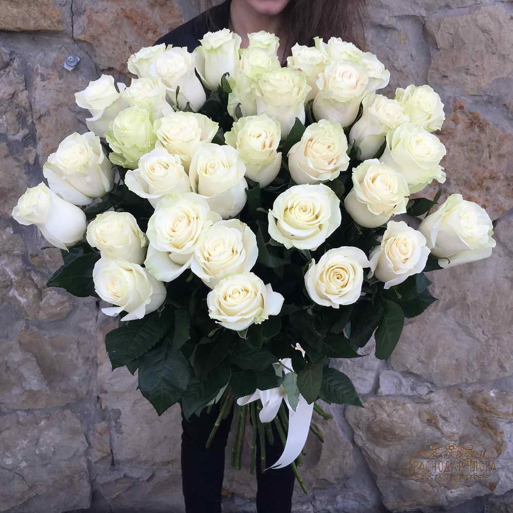 Красивые картинки цветов белые розы, удивительные букеты 6