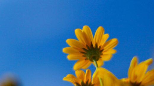 Красивые картинки цветов для заставки телефона - подборка 16