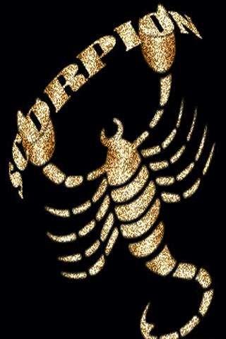 Красивые обои и картинки скорпионов на телефон на заставку 4