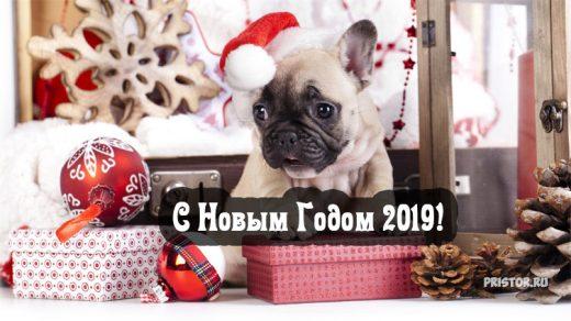 Красивые открытки, картинки поздравления С Новым Годом 2019 9