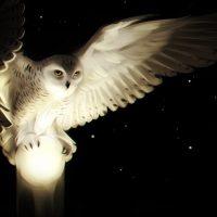 Необычные и красивые картинки сов, совушек - подборка 30 фото 22