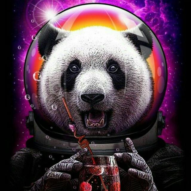 Панды очень красивые и прикольные картинки, арты, фото - подборка 4
