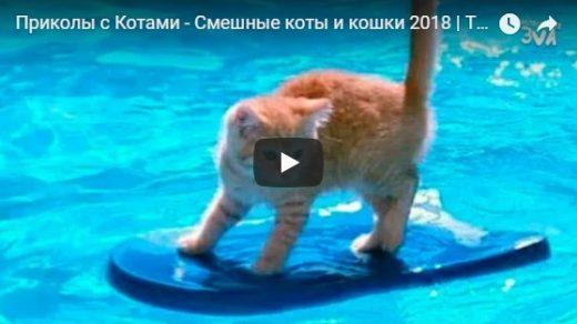 Приколы с Котами, очень смешные видео с Кошками - сборка №140