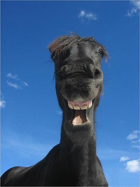Прикольные и смешные картинки улыбки - забавная подборка 4