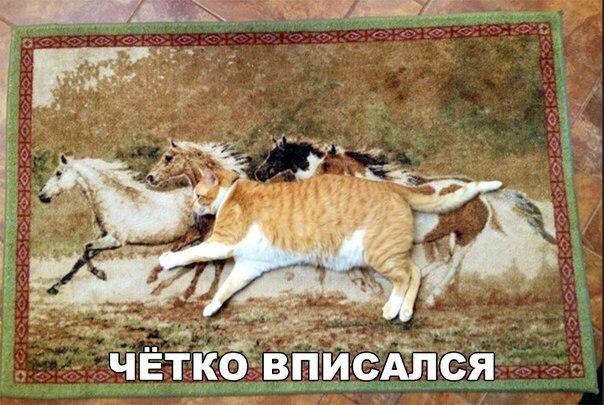 Самые смешные и веселые картинки, фото с надписями - подборка №92 2