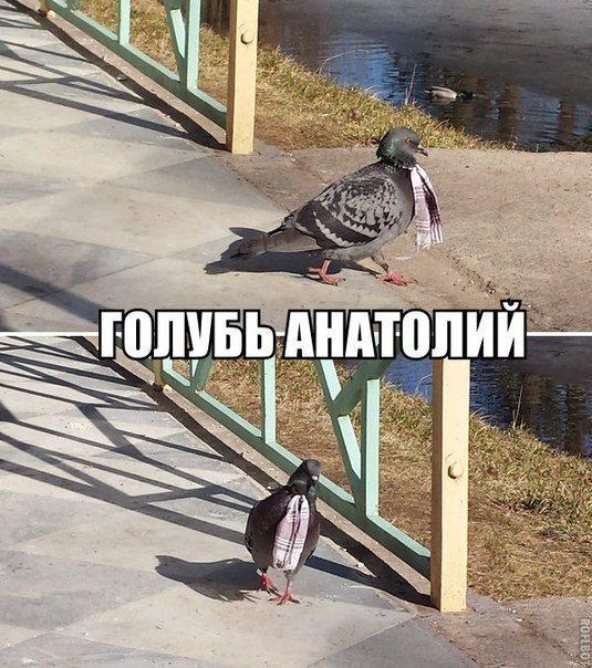 Самые смешные и веселые картинки, фото с надписями - подборка №92 9