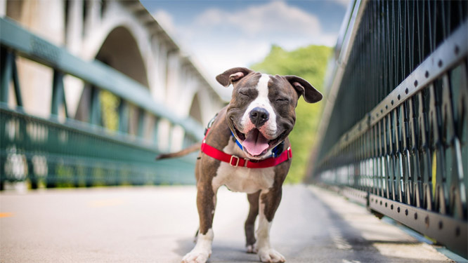 Смешные и прикольные фотки собак, щенков - забавная коллекция 10