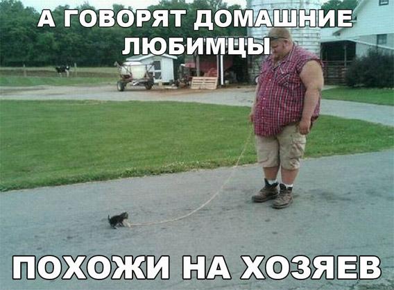 Смешные и прикольные фотки собак, щенков - забавная коллекция 14