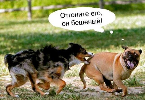 Смешные и прикольные фотки собак, щенков - забавная коллекция 3