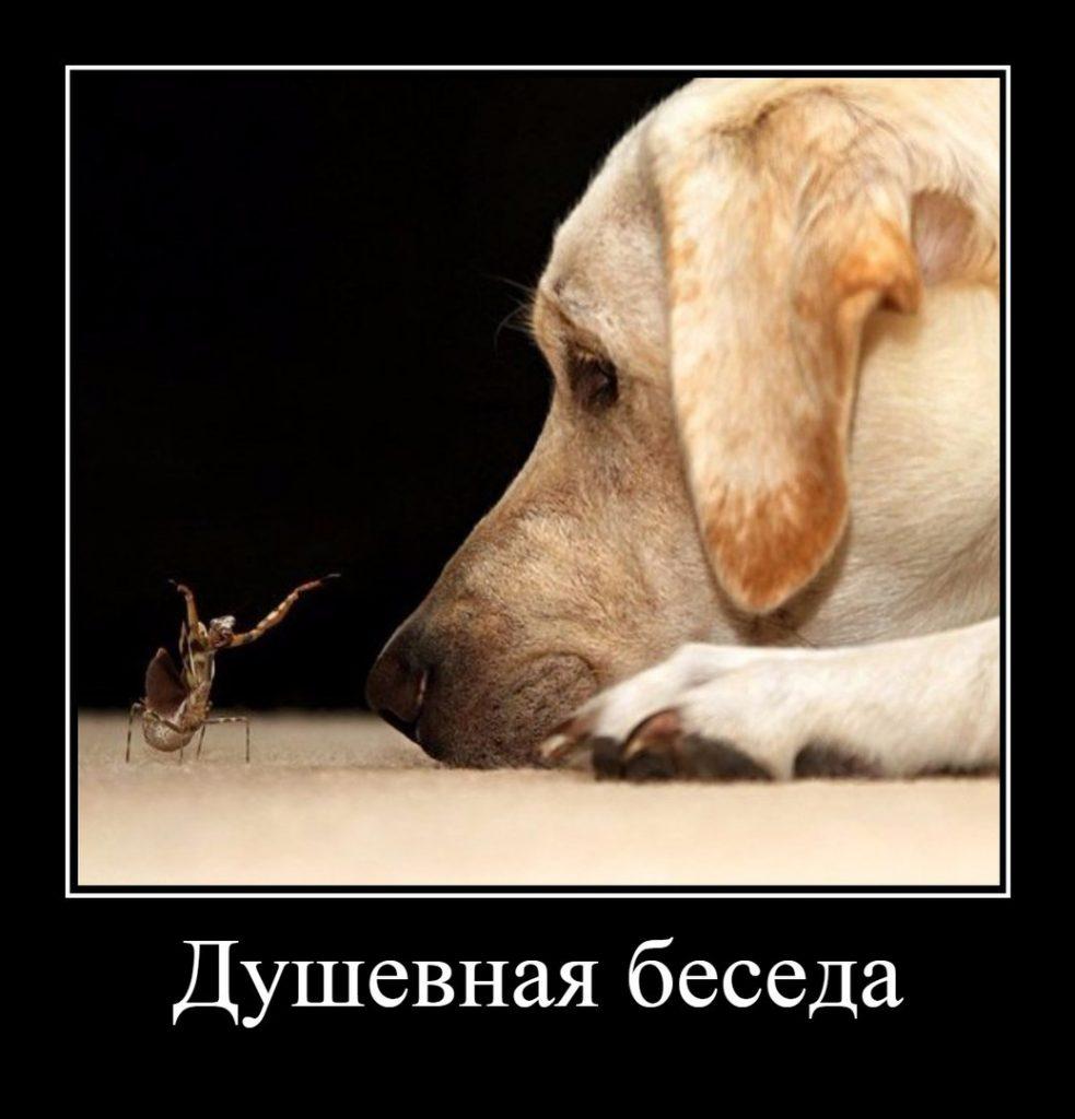 Смешные и прикольные фотки собак, щенков - забавная коллекция 4