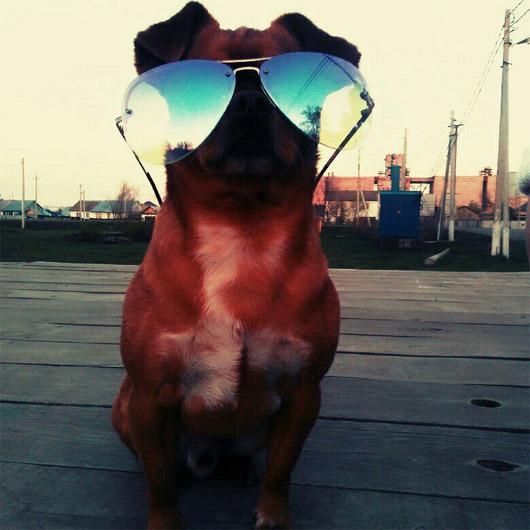 Смешные и прикольные фотки собак, щенков - забавная коллекция 6