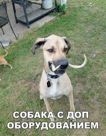 Смешные и прикольные фотки собак, щенков - забавная коллекция 9