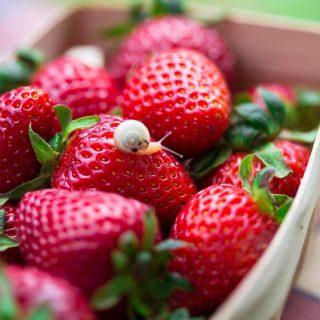 Как повысить урожай клубники - 7 полезных советов садоводам 1