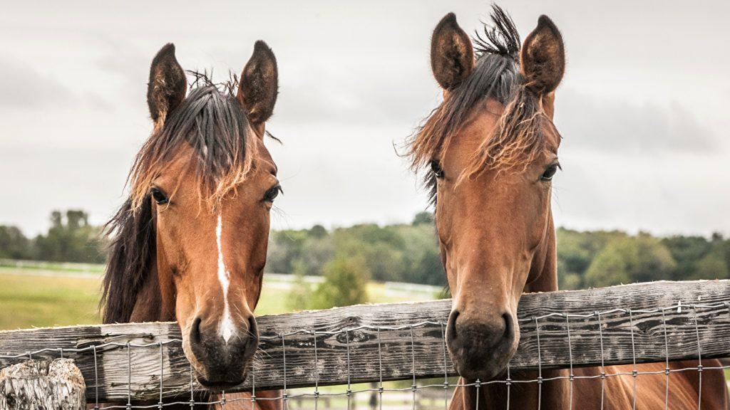 Картинки на рабочий стол лошади - красивые и удивительные 1