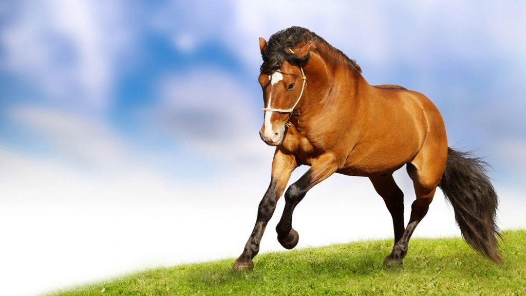 Картинки на рабочий стол лошади - красивые и удивительные 12