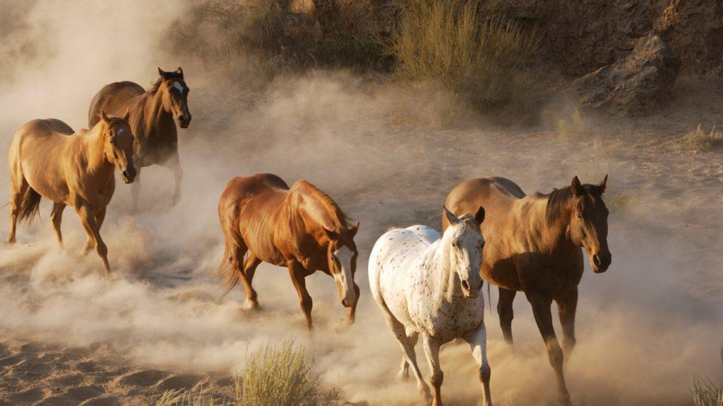 Картинки на рабочий стол лошади - красивые и удивительные 15