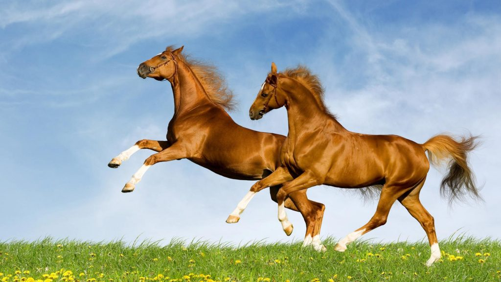 Картинки на рабочий стол лошади - красивые и удивительные 2