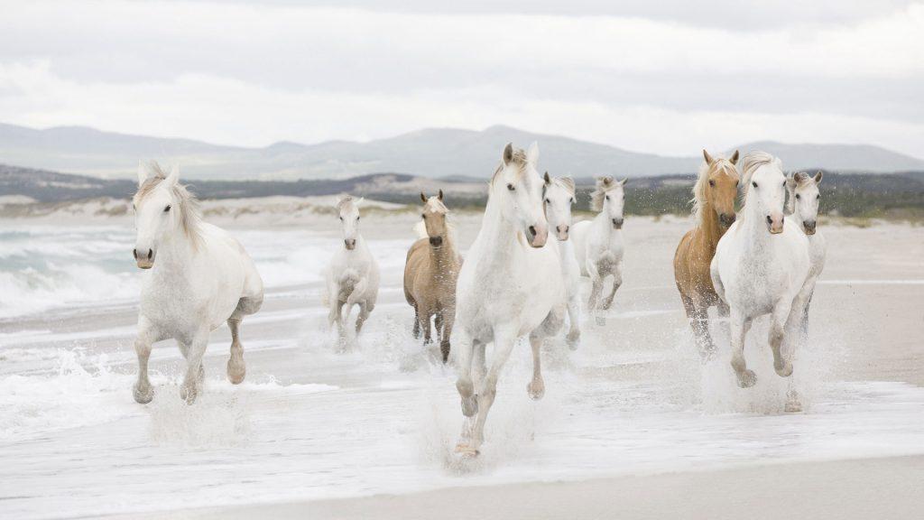 Картинки на рабочий стол лошади - красивые и удивительные 7