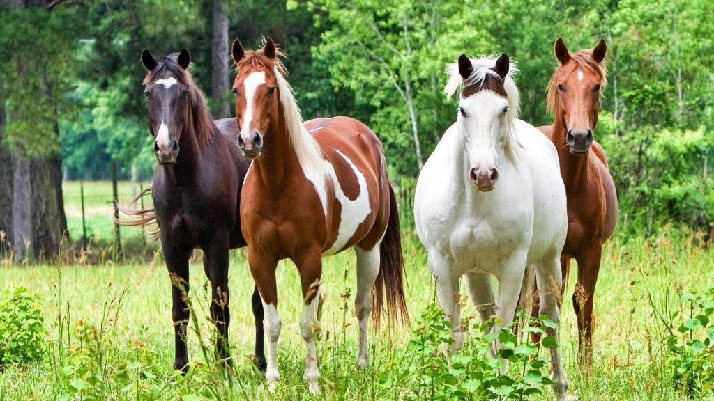 Картинки на рабочий стол лошади - красивые и удивительные 8