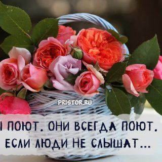 Красивые высказывания и цитаты про цветы со смыслом - подборка 1