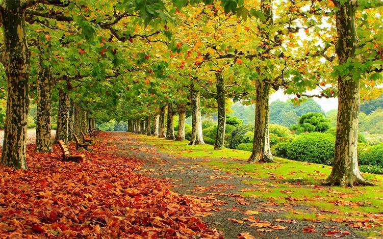 Красивые и удивительные картинки осень в парке - подборка фото 1