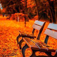 Красивые и удивительные картинки осень в парке - подборка фото 15