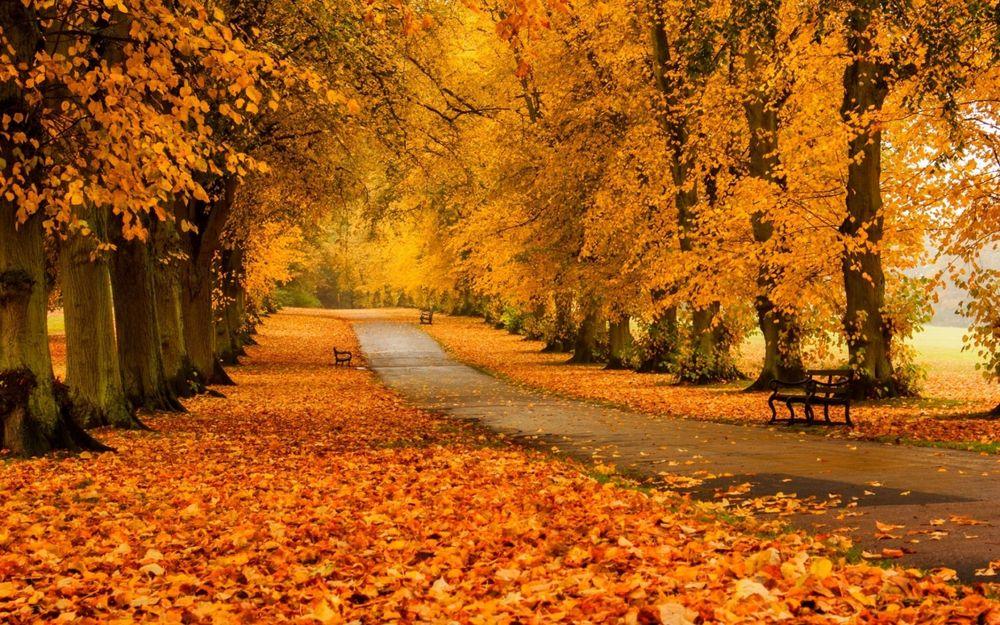 Красивые и удивительные картинки осень в парке - подборка фото 8