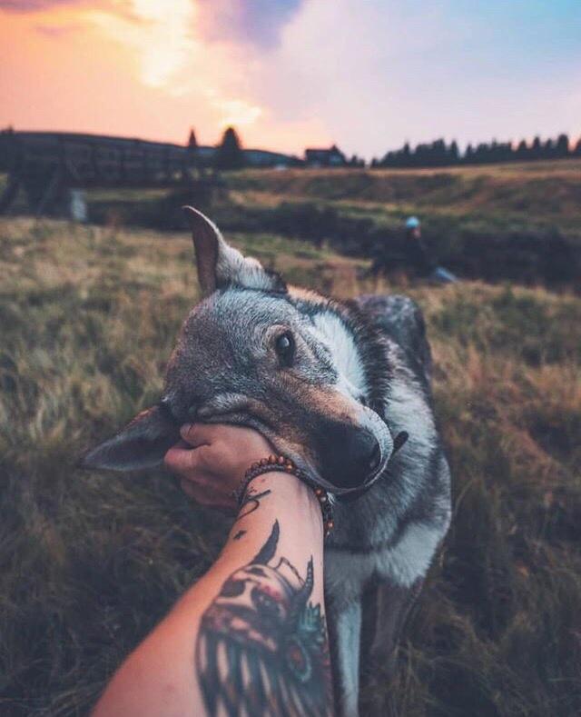Красивые картинки с животными на аву парням и девушкам - сборка 4