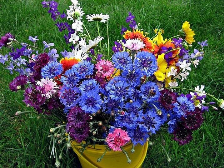 Красивые полевые цветы - удивительные картинки и фотографии
