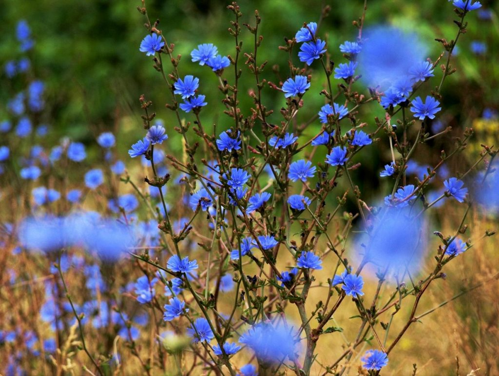 Красивые полевые цветы - удивительные картинки и фотографии 2
