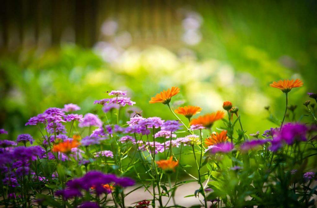 Красивые полевые цветы - удивительные картинки и фотографии 7