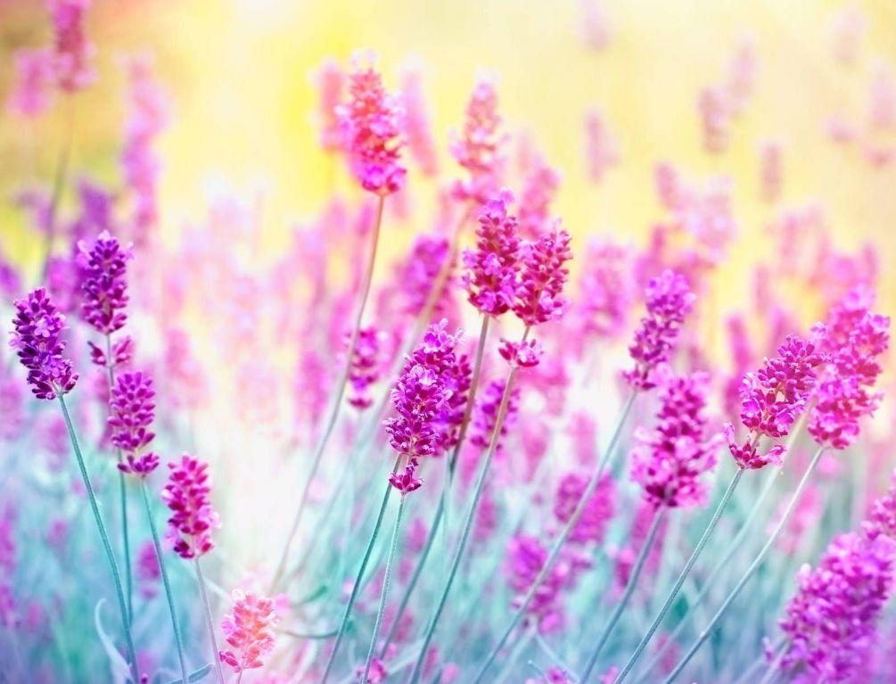 Красивые полевые цветы - удивительные картинки и фотографии 9