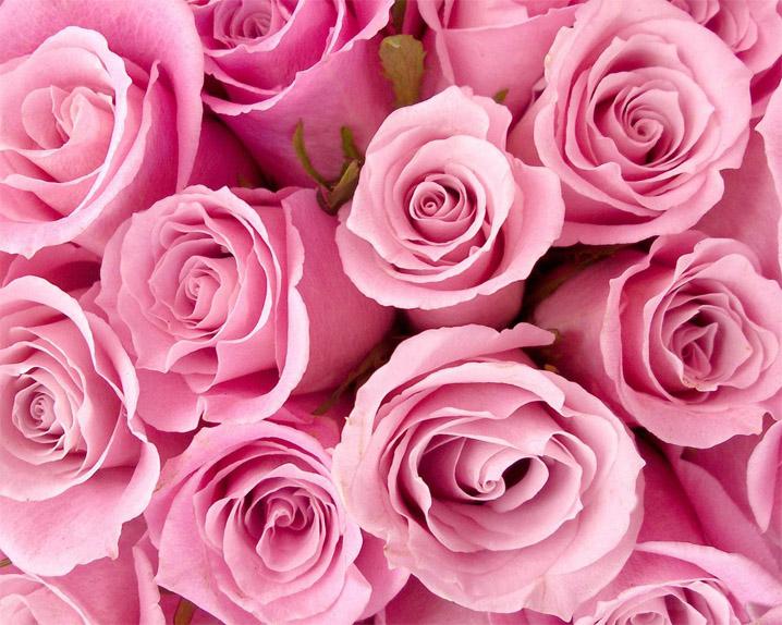 Красивые розовые картинки на заставку и обои - подборка 1
